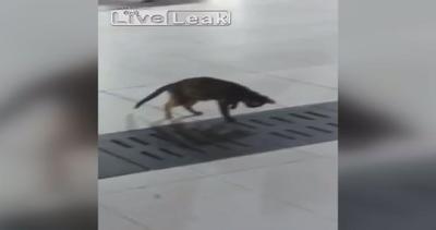 La pazienza premia: il gatto conquista la sua preda