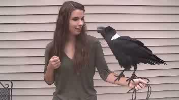 Il corvo parlante