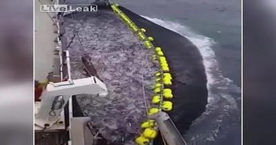 Pesca miracolosa: in acqua c'è ancora qualcosa