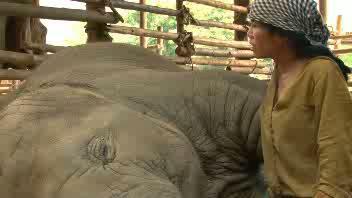 La donna che 'canta' all'elefante