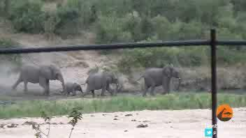 L'elefantino rotola dalla collina