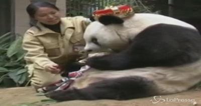 Cina, il compleanno del panda Basi