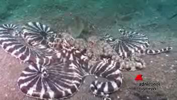 Una lotta d'amore sul fondo del mare