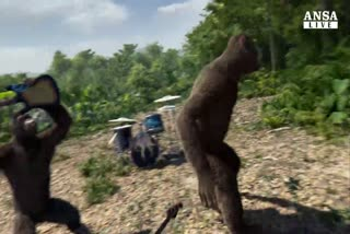 Tornano i Coldplay, e diventano scimpanze'