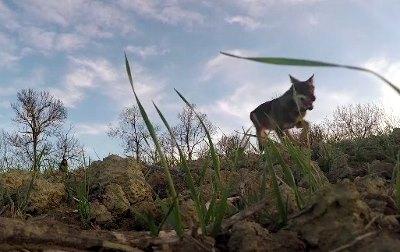 Il lupo con le ossa rotte è tornato a correre