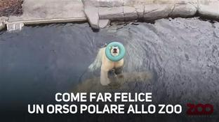 Non immaginereste mai come far felice un orso polare