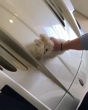 Giovani e ricchi usano il cagnolino per pulire la Maserati: polemica sul web